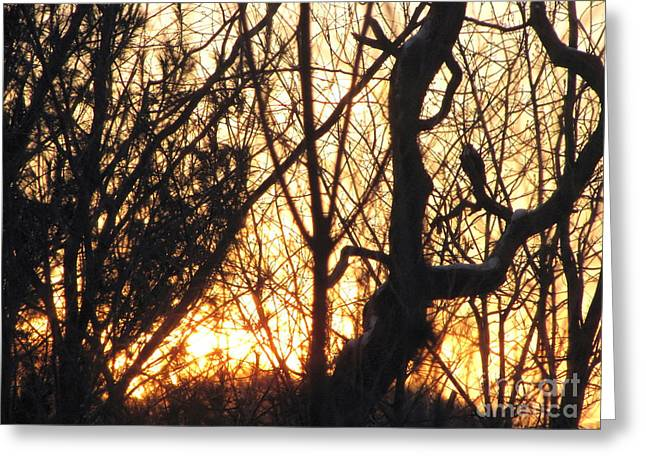 Greeting Card featuring the photograph Sunblaze-3  by Melissa Stoudt