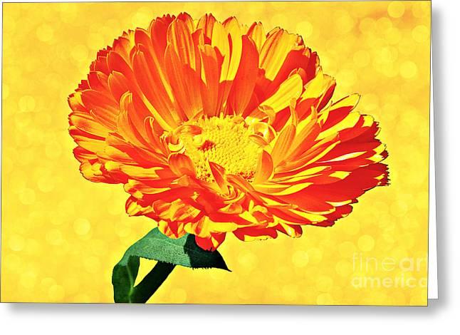 Sunburst Greeting Card by Elizabeth Winter
