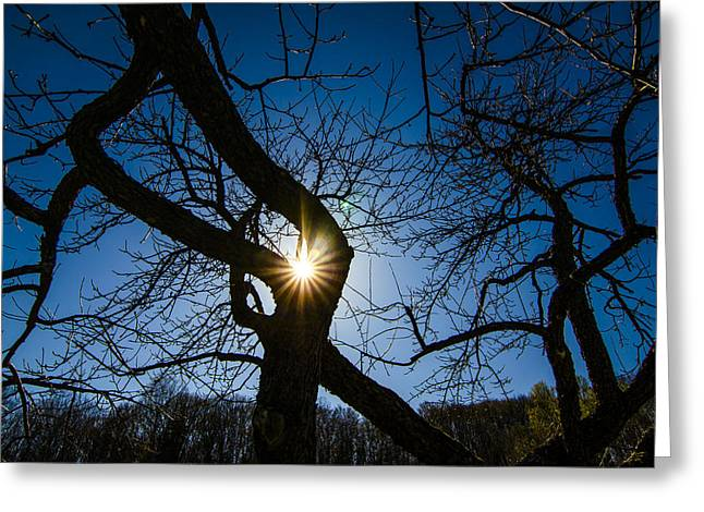 Sunburst In The Orchard Greeting Card