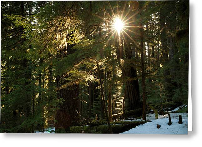 Sunburst In The Rainforest, Olympic Greeting Card by Art Wolfe