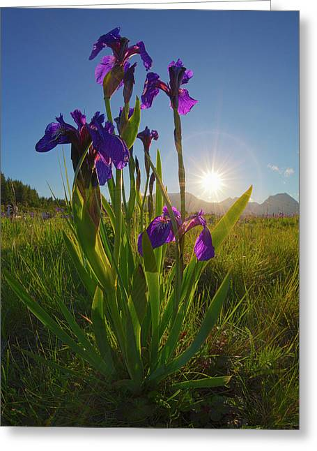 Sunburst Shines Through Clump Of Wild Greeting Card by Marion Owen