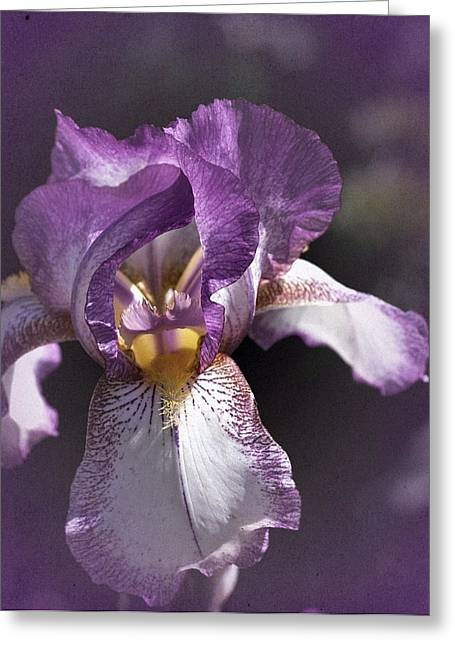 Sunday Iris No. 1 Greeting Card
