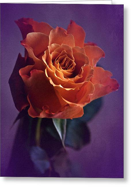 Sunday Rose  Greeting Card