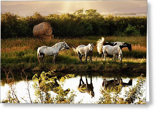 Greeting Card featuring the photograph Sundown by Elaine Manley