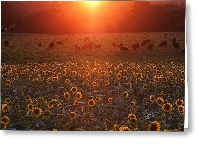 Sundown On Buttonwood Farm Greeting Card