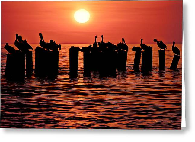 Sundown With Pelicans Greeting Card
