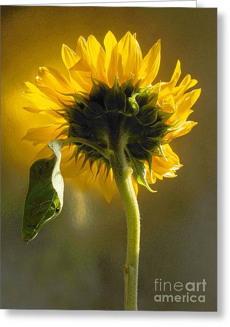 Sunflower 1 Greeting Card by Addie Hocynec