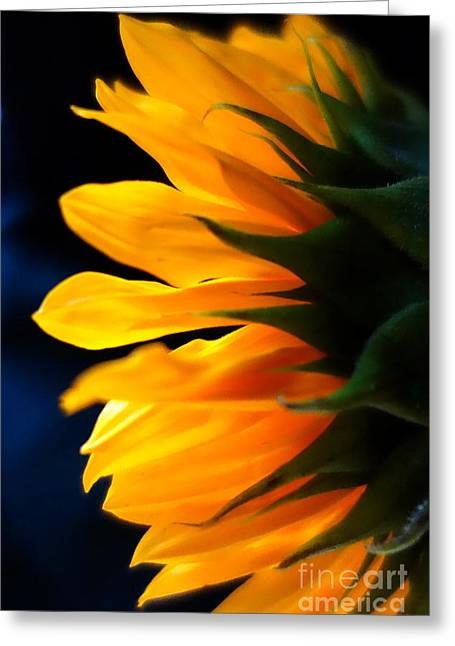 Greeting Card featuring the photograph Sunflower 2 by Jacqueline Athmann