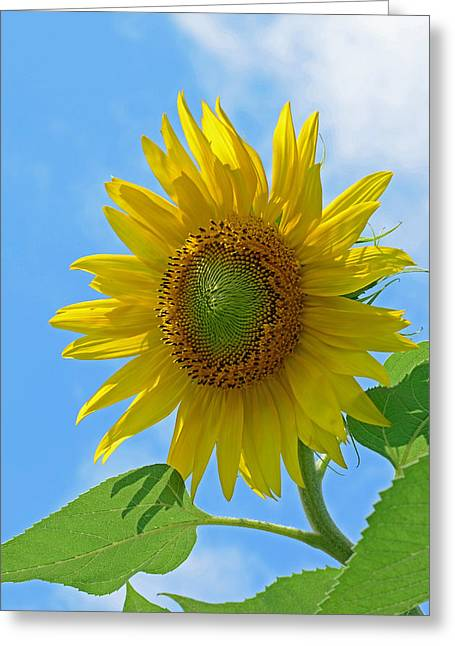 Sunflower Against Blue Sky Greeting Card