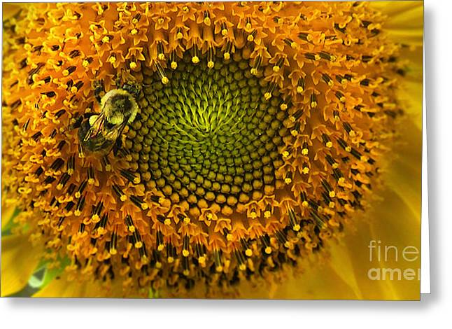 Sunflower An Bumble Greeting Card by Brittany Perez