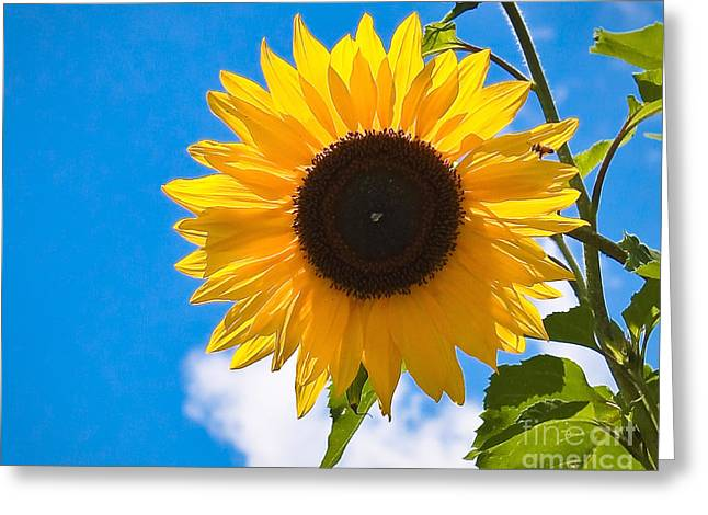 Sunflower And Bee At Work Greeting Card