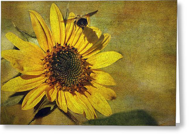 Sunflower And Bumble Bee Greeting Card