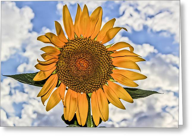 00008 Sunflower And Clouds Greeting Card by Photographic Art by Russel Ray Photos