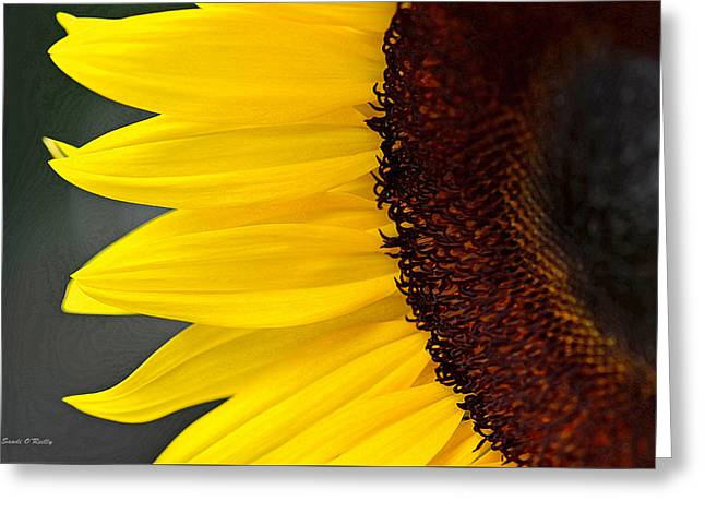 Sunflower Beauty Greeting Card by Sandi OReilly