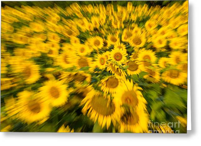 Greeting Card featuring the photograph Sunflower Blur by Dale Nelson