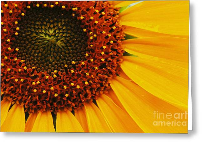 Joy Of The Sunflower Greeting Card by Bob Christopher