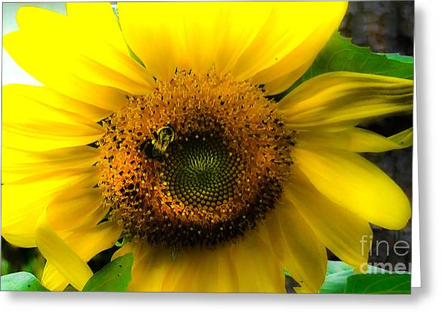 Sunflower Greeting Card by Brittany Perez