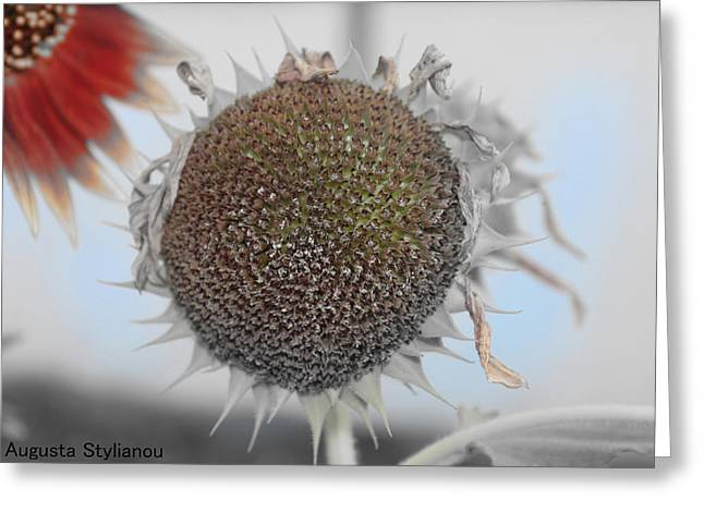 Sunflower Core Greeting Card by Augusta Stylianou