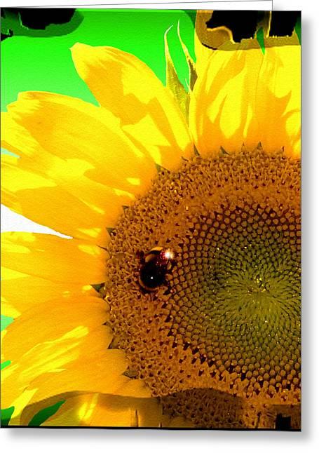 Greeting Card featuring the digital art Sunflower by Daniel Janda