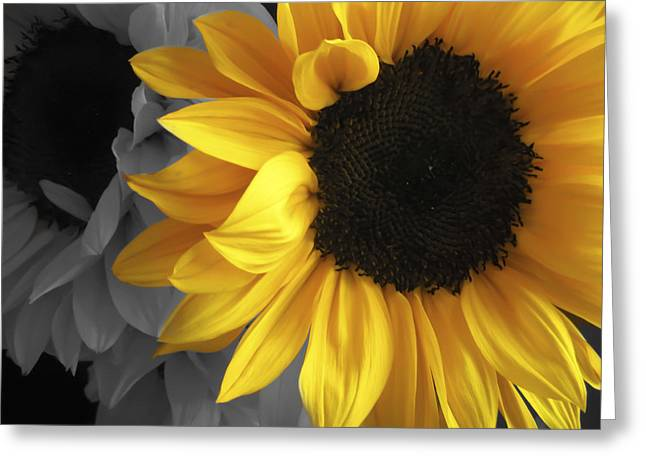 Sunflower Days Greeting Card by The Forests Edge Photography - Diane Sandoval
