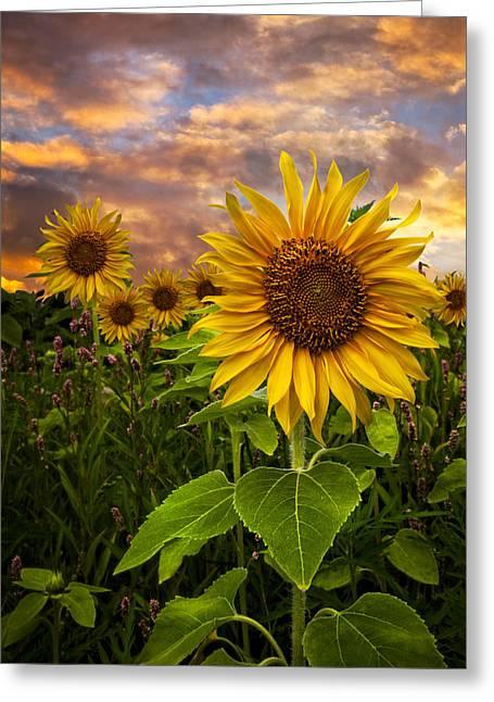 Sunflower Dusk Greeting Card by Debra and Dave Vanderlaan