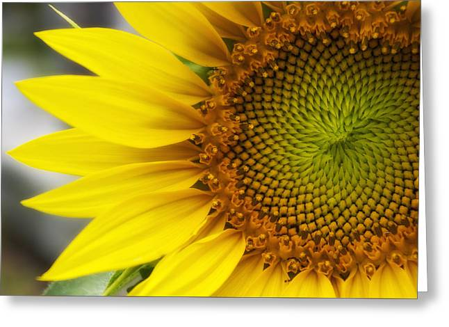 Sunflower Face Greeting Card