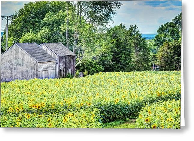 Sunflower Farm Greeting Card by Jerri Moon Cantone