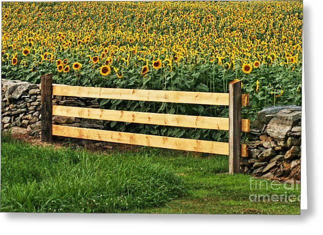 Sunflower Fence Greeting Card by Marcel  J Goetz  Sr