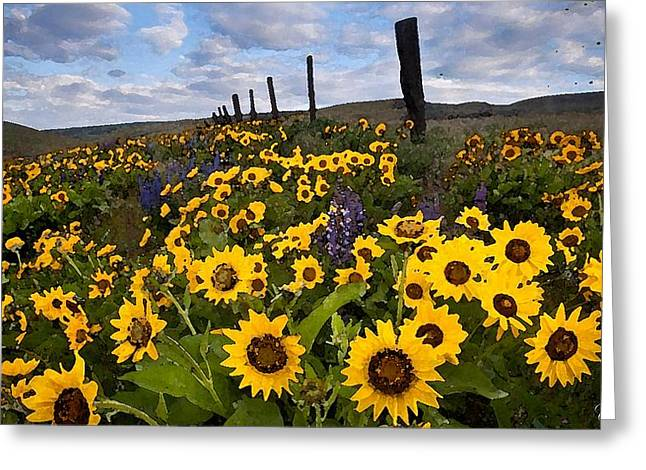 Sunflower Field Greeting Card by Cole Black