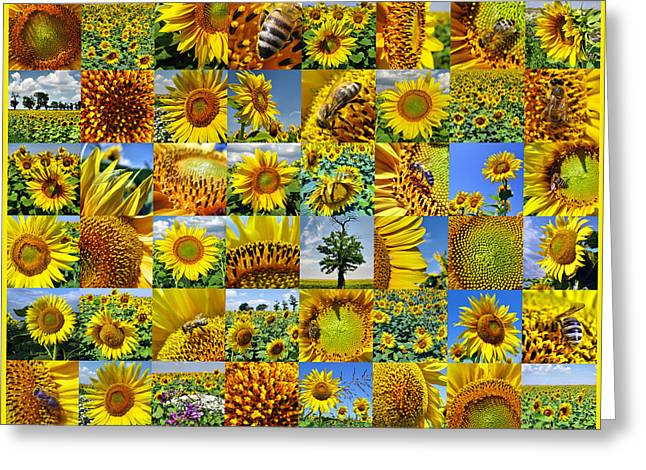 Sunflower Field Collage In Yellow Greeting Card