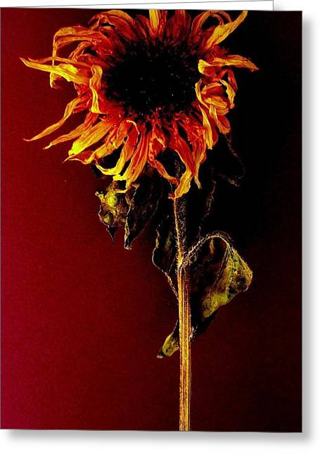 Sunflower Greeting Card by Fred Wilson