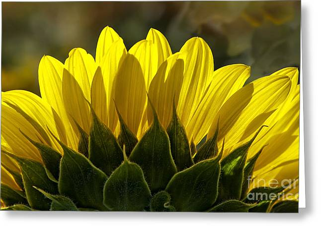 Sunflower Glowing Abstract By Nature Greeting Card by Lee Craig