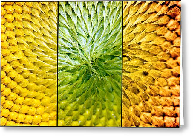 Sunflower Heart Triptych Greeting Card