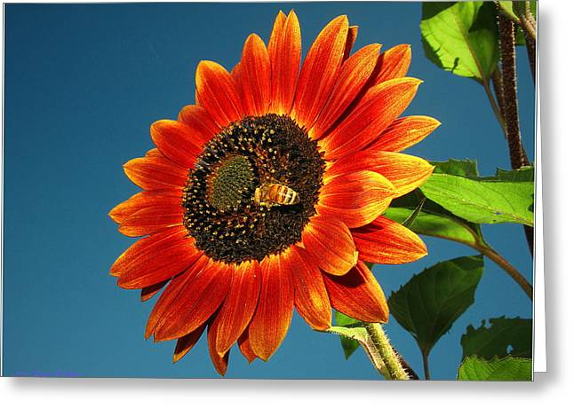 Greeting Card featuring the photograph Sunflower Honey Bee by Joyce Dickens