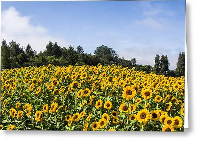 Sunflower Horizon Number 2 Greeting Card