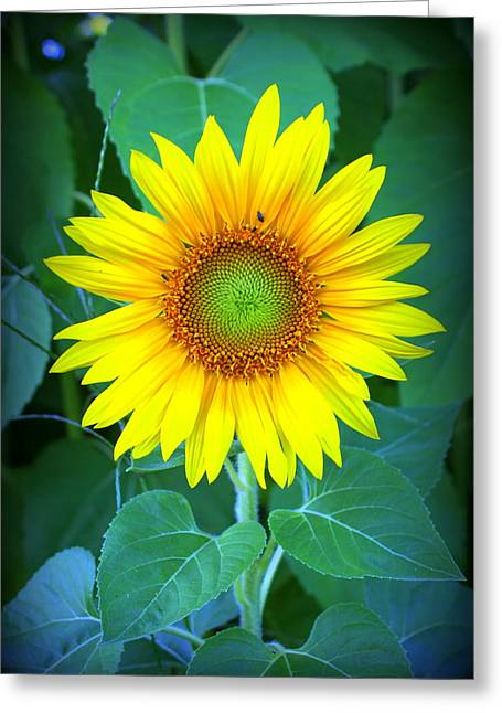 Sunflower In Green Greeting Card