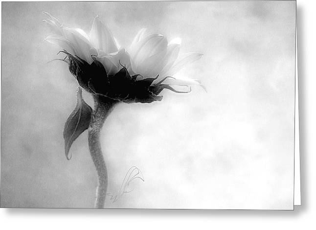 Sunflower In Profile Greeting Card by Louise Kumpf