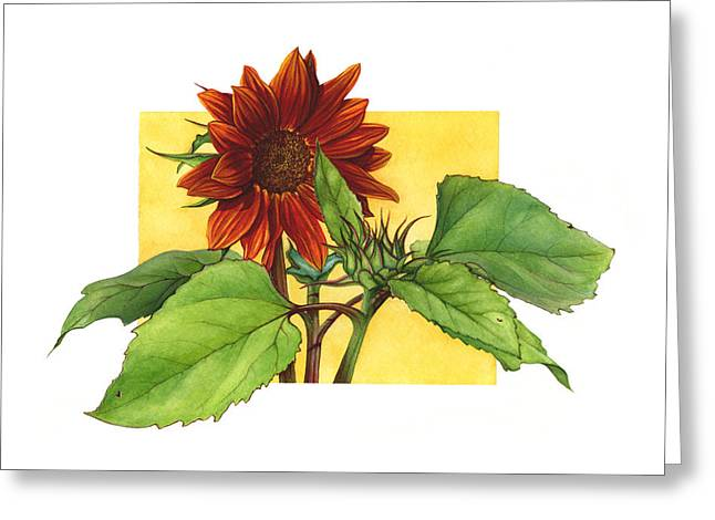 Sunflower In Red Greeting Card by Suzannah Alexander