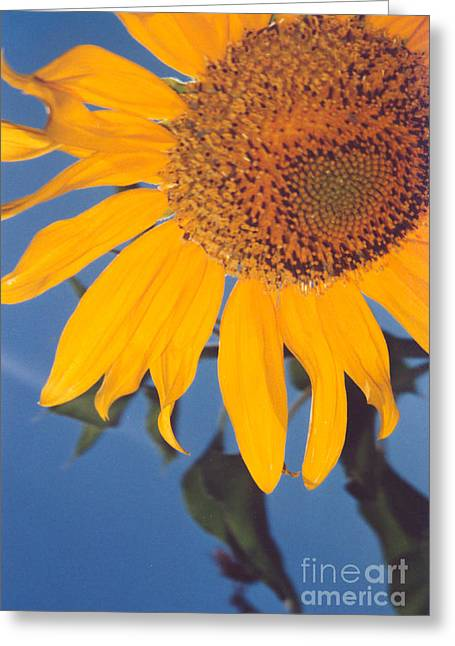 Sunflower In The Corner Greeting Card by Heather Kirk
