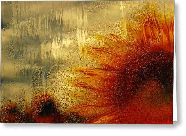 Sunflower In The Rain Greeting Card by Jack Zulli