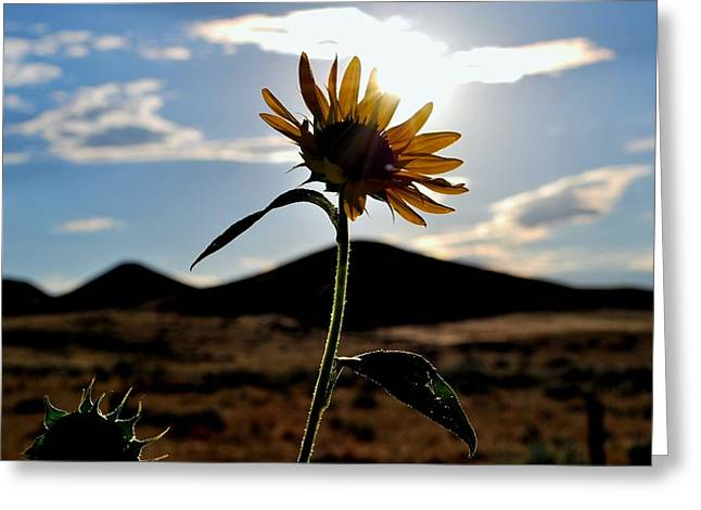 Greeting Card featuring the photograph Sunflower In The Sun by Matt Harang