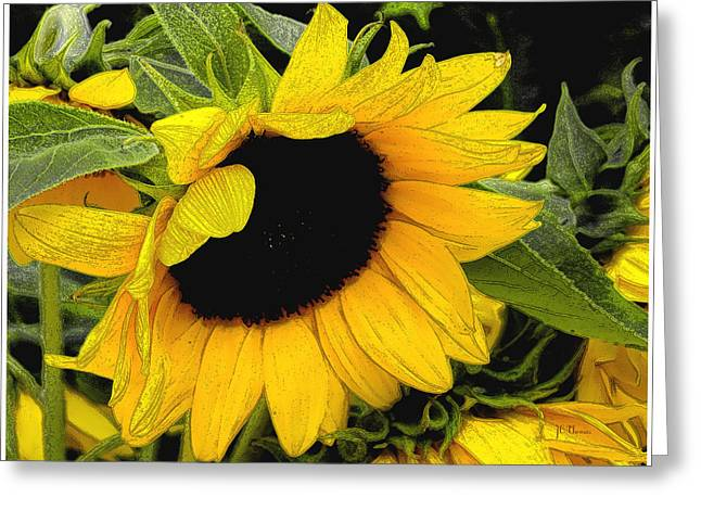 Greeting Card featuring the photograph Sunflower by James C Thomas
