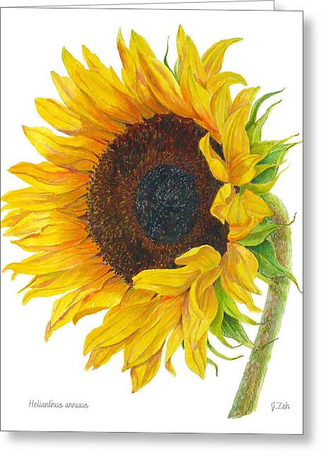 Sunflower - Helianthus Annuus Greeting Card by Janet  Zeh