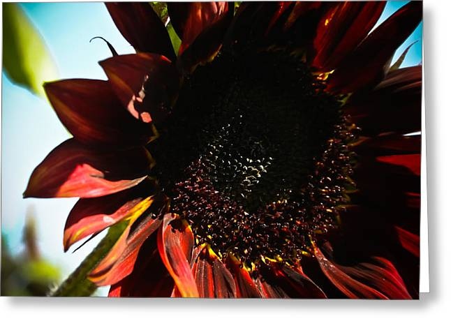 Greeting Card featuring the photograph Sunflower by Joel Loftus