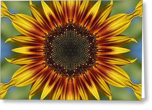 Sunflower Kaleidoscope Greeting Card by Cindi Ressler