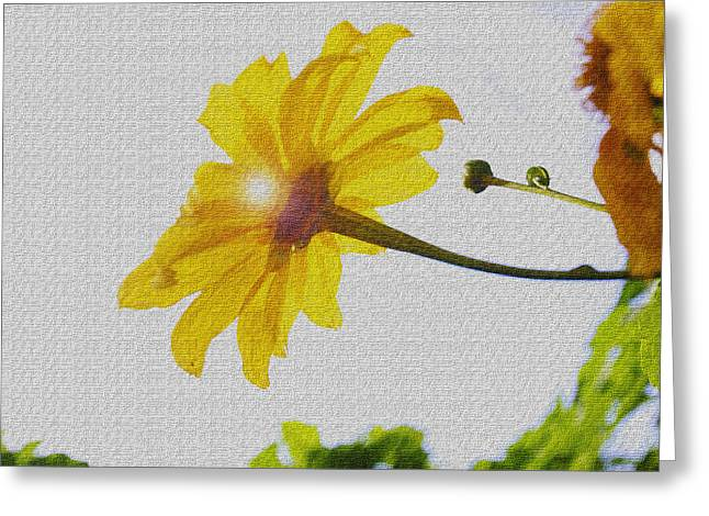 Sunflower Greeting Card by Kandy Hurley