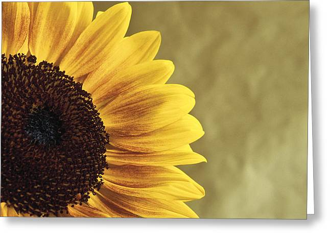 Greeting Card featuring the photograph Sunflower by Lana Enderle