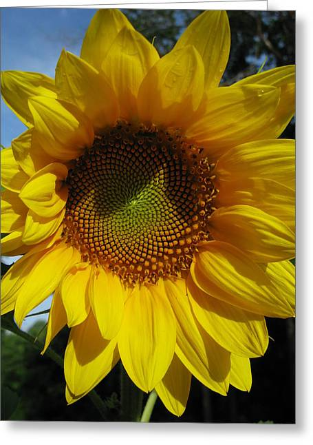 Sunflower  Greeting Card by Laura Corebello