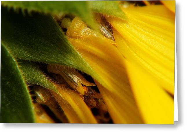 Sunflower Macro 5 Greeting Card by Scott Hovind