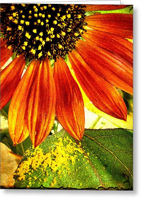 Sunflower Memories Greeting Card by Kathy Bassett